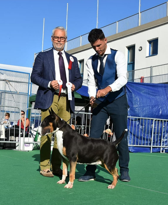 International dog show Gibraltar